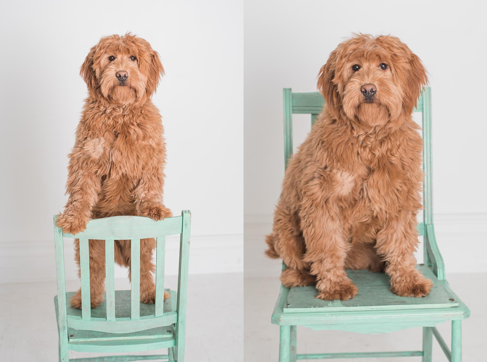 Dog Photo Session | Lafayette Indiana Photographer | Lafayette Indiana Dog Photographer | Luminant Photography | Victoria Rayburn